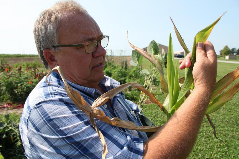 Tim Reinbott, director of field operations at the University of Missouri's South Farm Research Center, will be studying how drought-stressed corn and soybean plants react to the lighting and temperature changes during the total solar eclipse on Aug. 21.