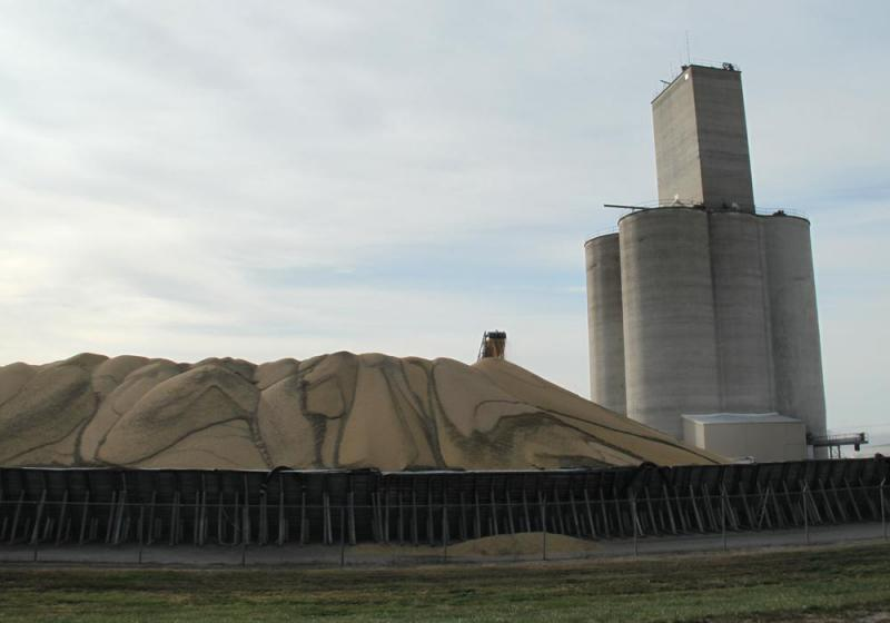 Soybeans are piled up at a Nebraska grain elevator.