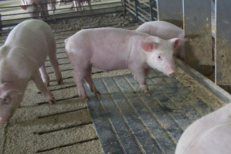 New markets may be key to pork sales in 2019.