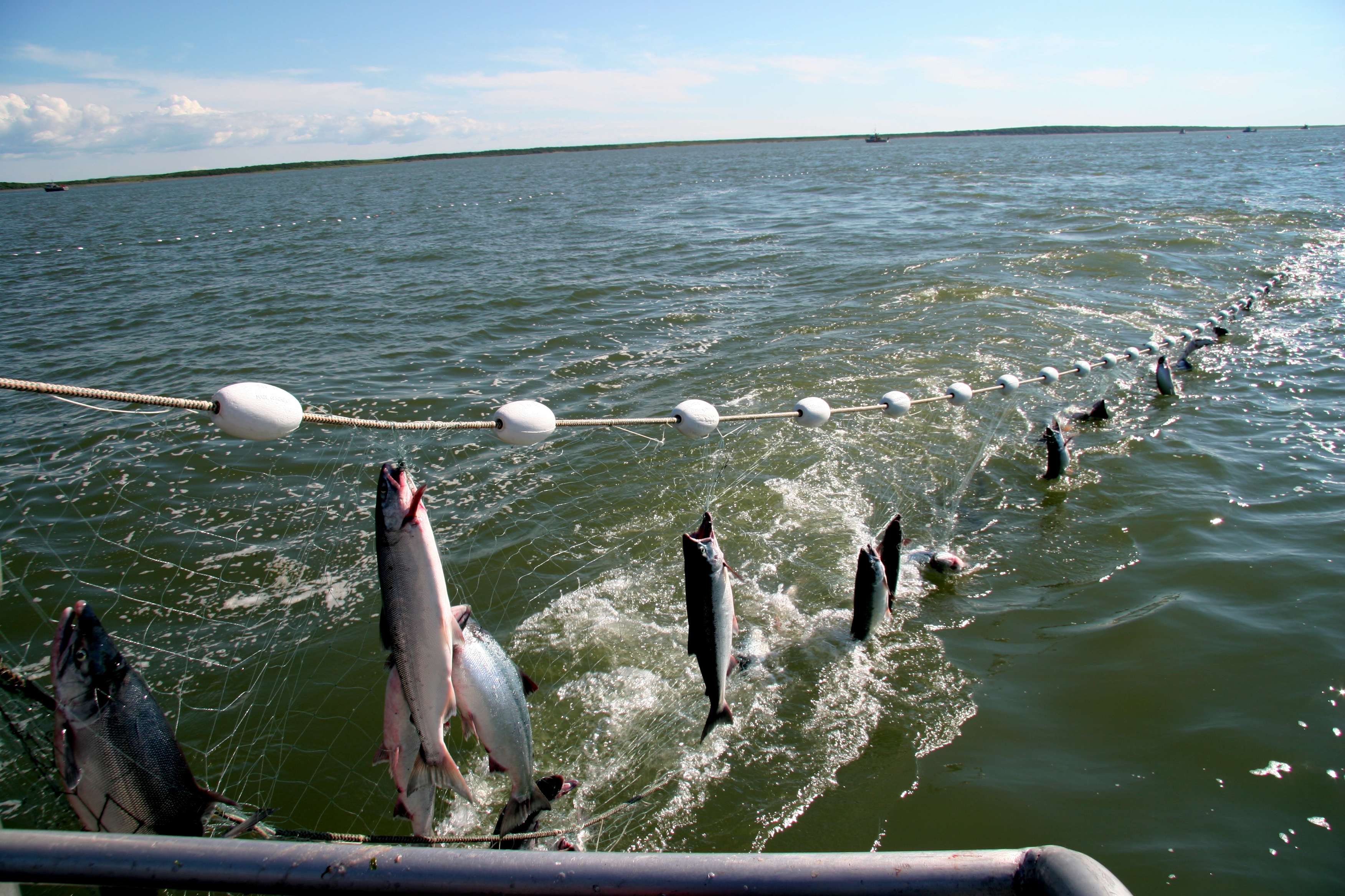 Bristol bay fishermen hit the 2 million mark june 29 for Fishing net for sale