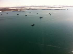 Just some of the herring tenders participating in the 2013 Togiak Sac Roe Herring Fishery.