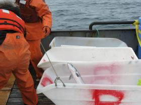 The sockeye caught in the Port Moller Test Fishery are separated based on the size of mesh they were caught in.