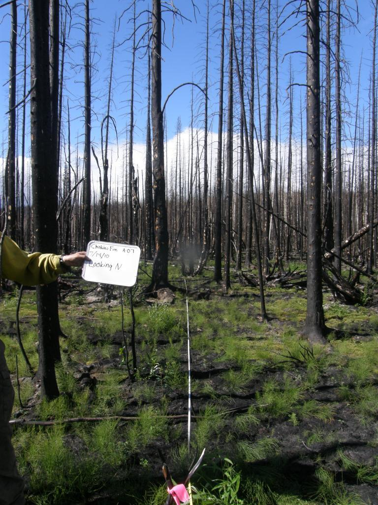 Wrangell-St. Elias National Park and Preserve One Year After Fire