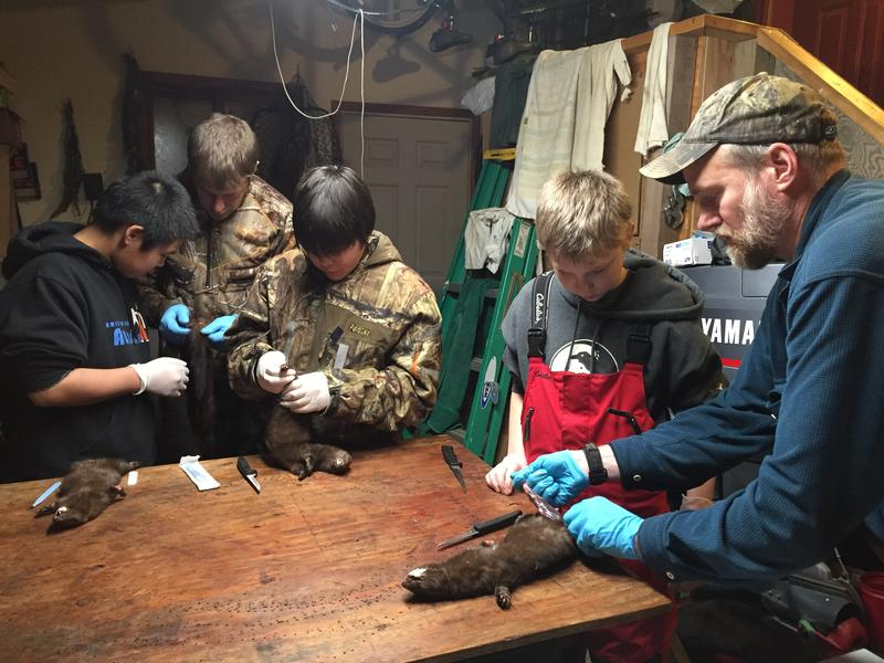 James Kasayulie, Reece Bennis, Noah Sage work on skinning at a 4-H Trapping Club meeting with adult leaders Joe Stalmaster and Andy Aderman in January 2016.