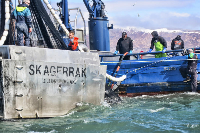 Fish and game takes conservative approach to 2017 togiak for Game and fish forecast