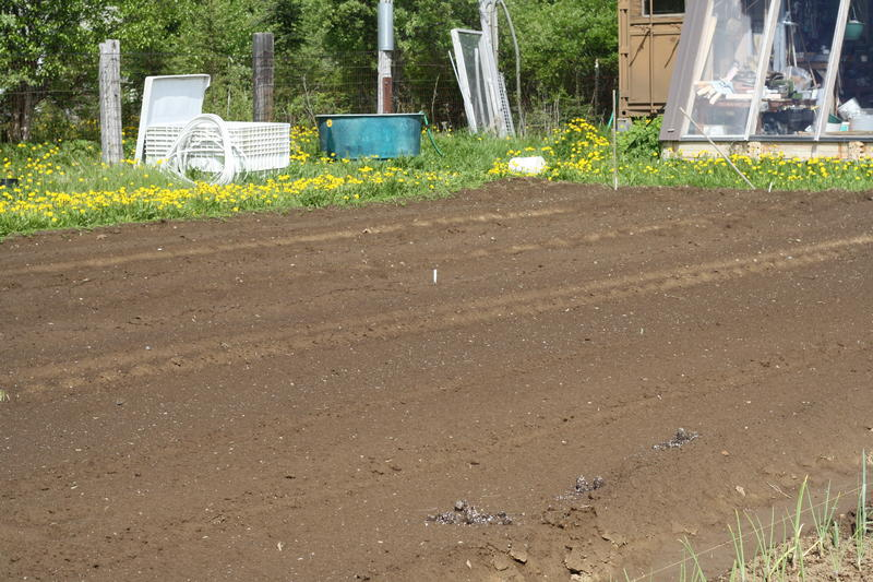 A potato field.