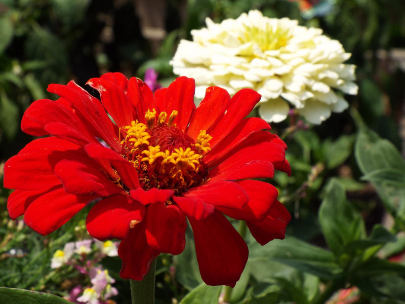 Learn to create your beautiful flowerbed with keynote speaker Dan Gill.