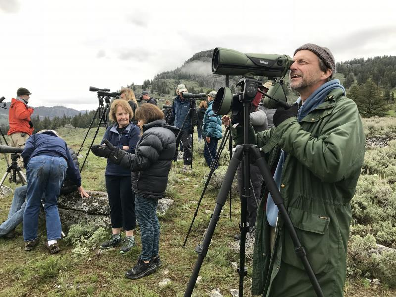 Mike Engel watches a pack of wolves in Yellowstone National Park's Lamar Valley