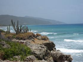 Cacti and mountains on Cuba's western coast.