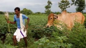 A farm worker tending his field.