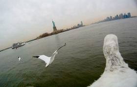 Camera onboard shot of snow geese flying over Hudson River, New York, background Statue of Liberty, USA