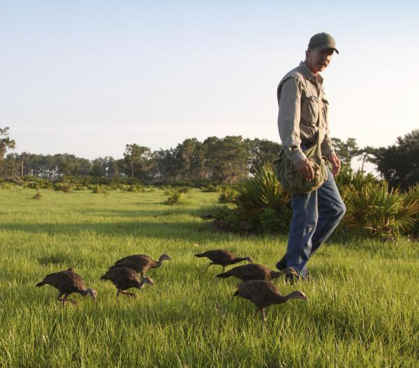 Jeff Palmer and his turkeys take a walk in central Florida.