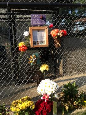 A memorial set up outside Apollo's enclosure.