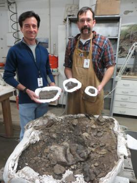 Paleontologists Tony Fiorillo and Ronald Tykoski from the Perot Museum of Nature and Science display three pieces of dinosaur bone that helped identify the new species.