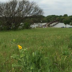 Restaurant developers want to use 2.5 acres at White Rock Lake's Boy Scout Hill for their restaurant. The grassy open space includes native, blackland prairie.
