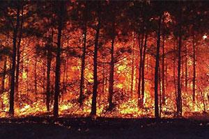 Wildfire, propelled by high winds, can burn the length of a football field in a single minute.