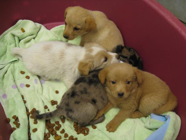 These four puppies are among the animals abandoned at the Dallas Animal Shelter