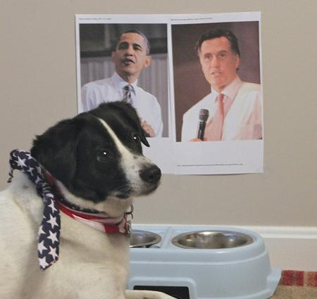 We've got paws full of ways to endure tonight's debate between President Obama and Governor Romney.