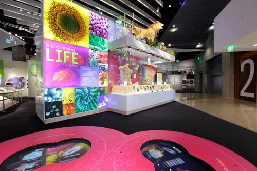 The Discovering Life Hall includes exhibits about genetics and Texas ecosystems.