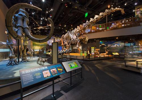 Giant skeletons of dinosaurs and other fossils are exhibited in the T. Boone Pickens Then and Now Hall.