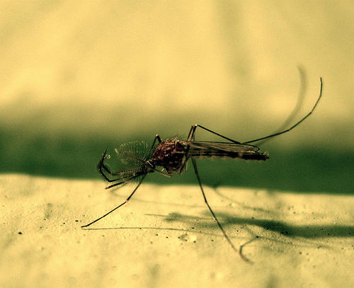Dallas County reported 398 cases of human West Nile virus in 2012. Nineteen people died of the mosquito-transmitted illness.