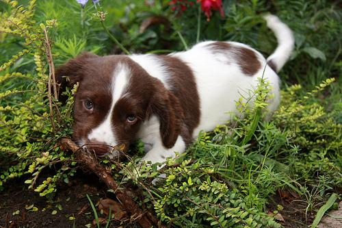 You might be tempted to call this pooch Brownie or Patches, but The Atlantic suggests that dubbing this spaniel Sam Baker would put you in good company.