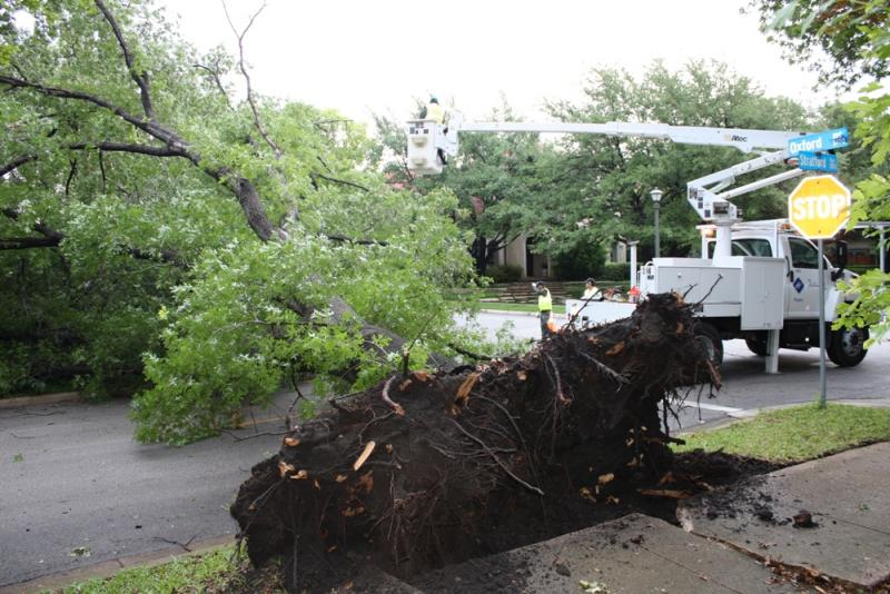 This tree ripped up the sidewalk and blocked Stratford Ave. until crews could clear it.