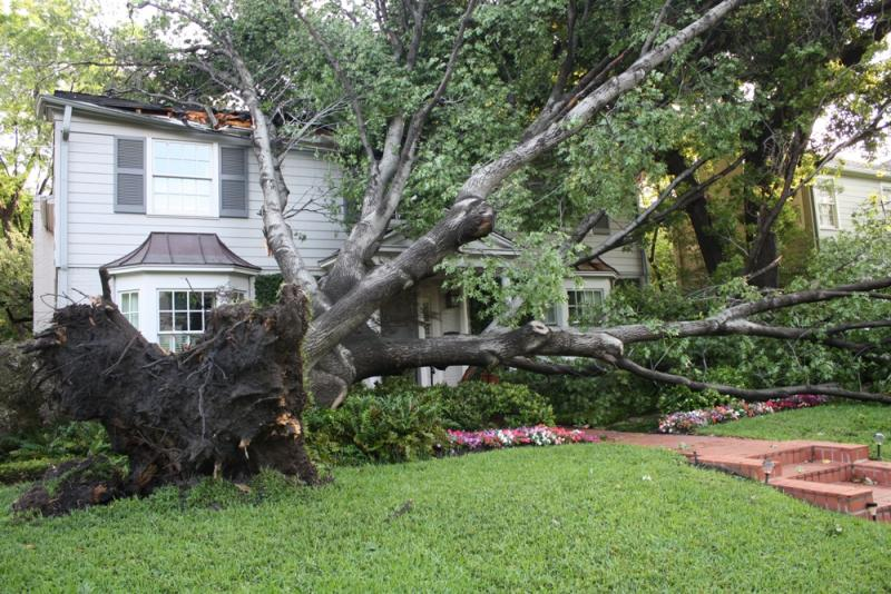 A massive tree landed on a roof in Highland Park after a bands of strong storms pushed through Dallas County last night.