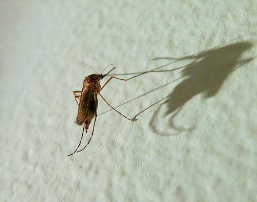 Dallas continues ground spraying hoping to eliminate the spread of West Nile Virus