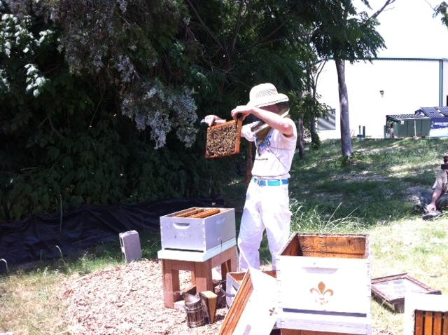 Brandon Pollard prepares to insert a frame of bees, brood and honey into its new home.