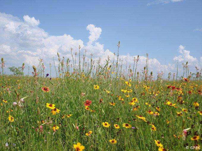 The Fort Worth Prarie is one of the largest remaining tracts of native tallgrass in North Texas. The General Land Office estimates it is worth $30 million.