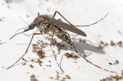 At this time last year, Dallas County had more than 100 human cases of West Nile virus. In 2012, the county reported 398 cases and 20 deaths.