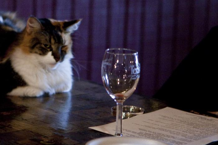 This cat can hold his wine better than the one Republican Dan Patrick uses to represent his opponent, David Dewhurst.