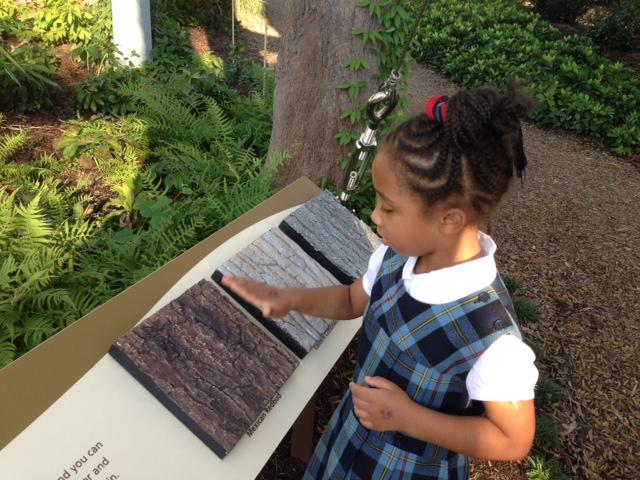 Olivia Walker, 6, checks out tree bark samples before scurrying off to jump and play in a giant eagle's nest.