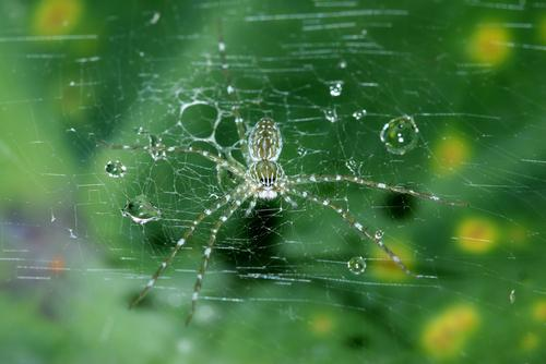 Spiders are movin' around North Texas these days, leaving plenty of web tracks.