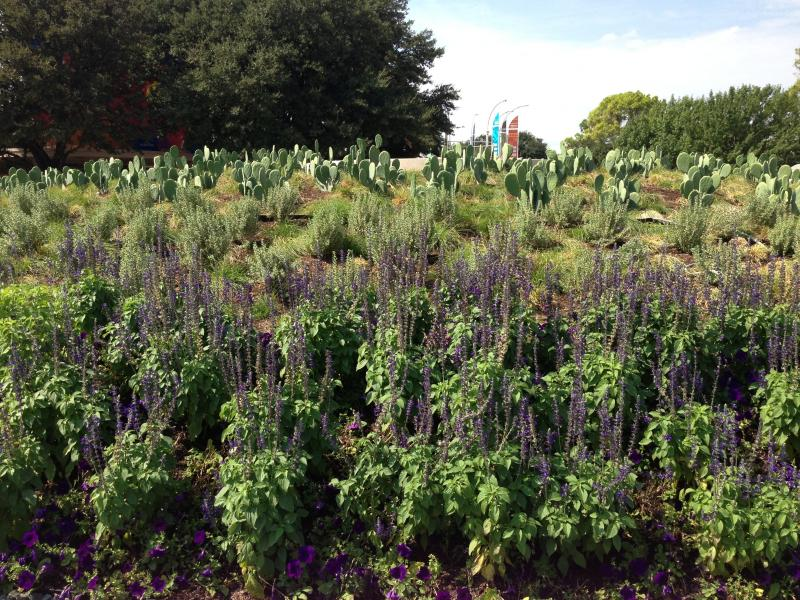 Native Texas plants cover the new-and-improved BIg Tex Circle.