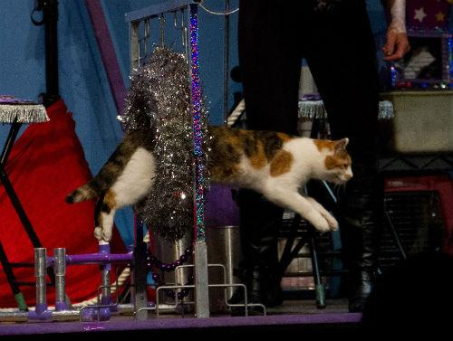 The Amazing Acro-Cats perform in Fort Worth through Sunday.