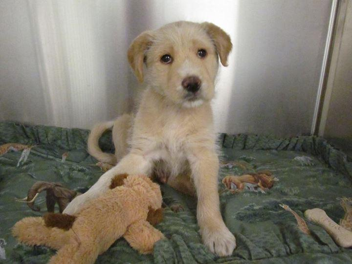 Stormy was rescued from a West Dallas storm drain on Monday.
