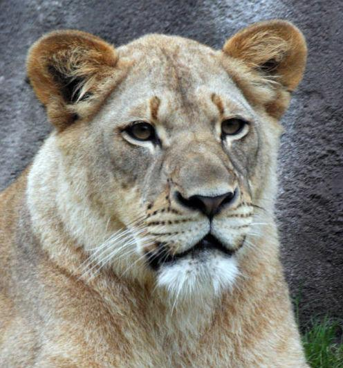 Johari was killed on Sunday at the Dallas Zoo after a male lion bit her in a surprise attack.