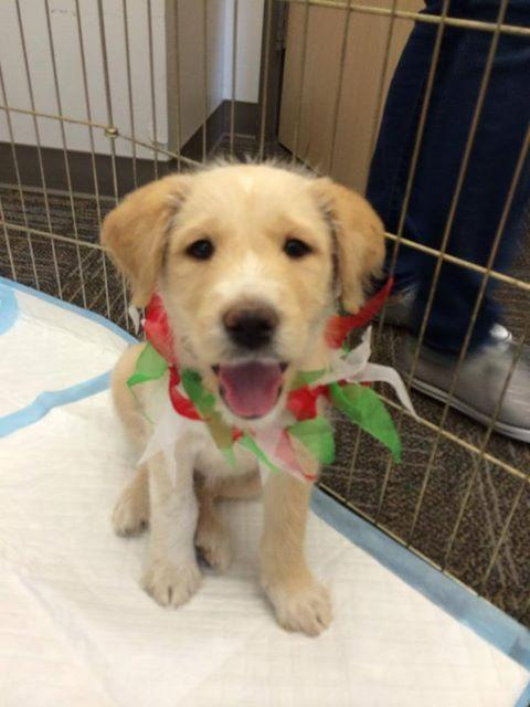 There's a happy ending for Stormy, the dog rescued from a West Dallas storm drain. He was adopted Sunday.