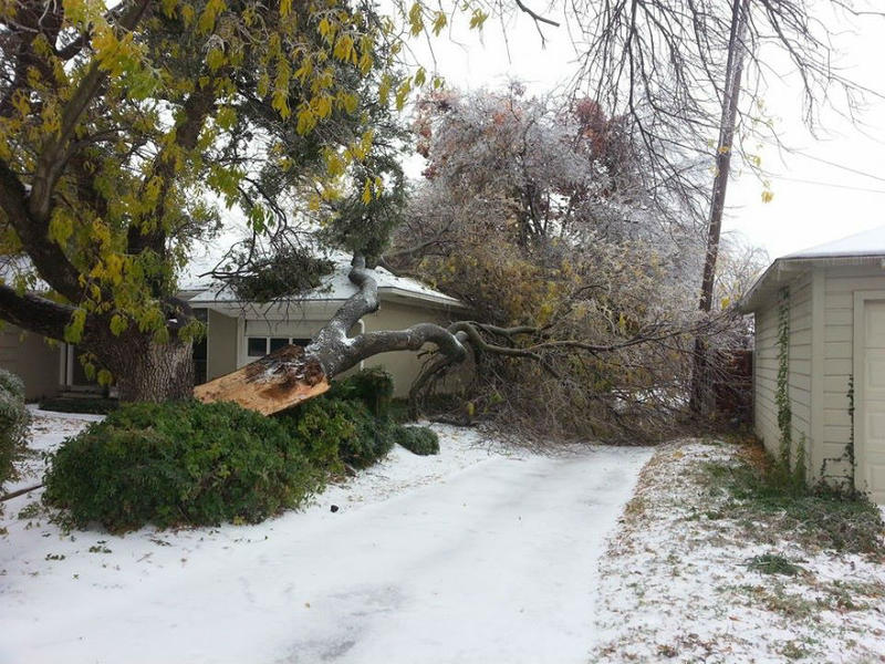 In Richardson, a massive tree in Richardson Heights was downed by the weather.