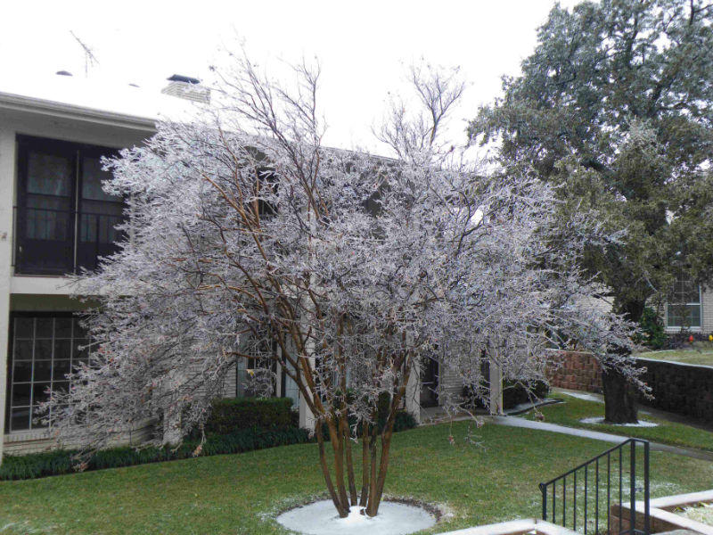 In Garland, the winter storm painted this tree in ice.