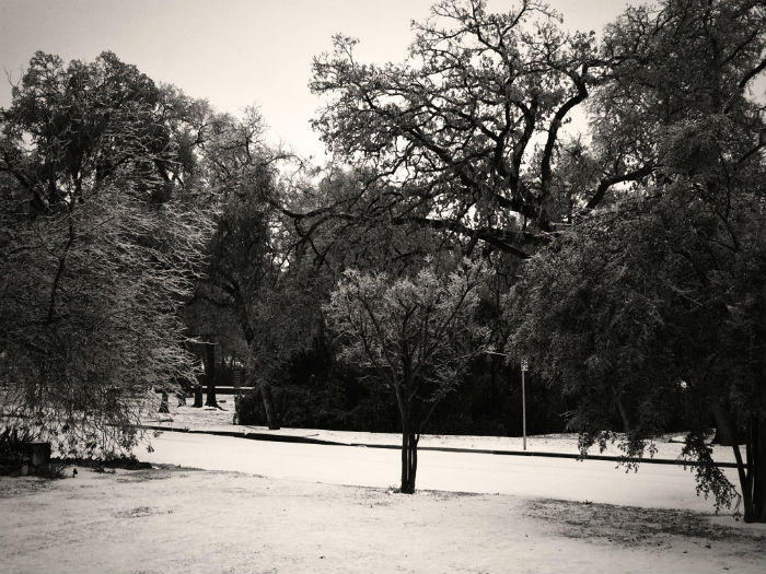 A wintry scene from north Oak Cliff.