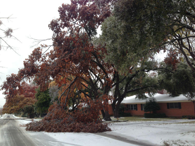 It's difficult for branches and trees to support the ice and sleet that's fallen across North Texas. This tree in East Dallas is among the victims.