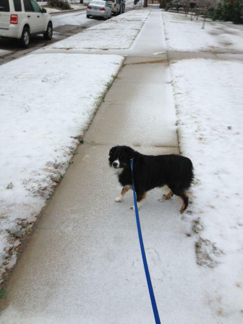 Roxy the dog took a chilly stroll around University Park this morning.