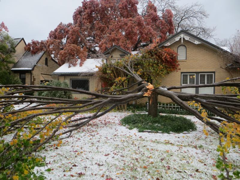The weight of ice on its limbs caused a tree on Mercedes Ave. in Dallas to splinter and crash into a roof and porch.