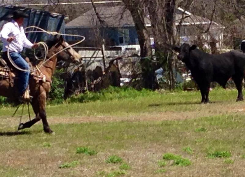 "A Waco ""patrol cowboy"" cornered the bull in a yard Tuesday afternoon."