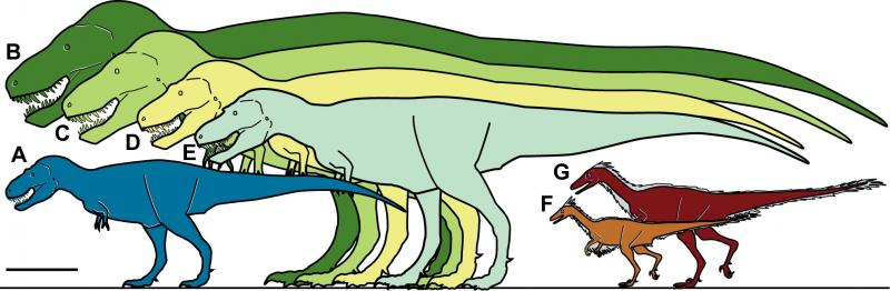 Size comparison of Nanuqsaurus (A) to Tyrannosaurus rex and other dinosaurs
