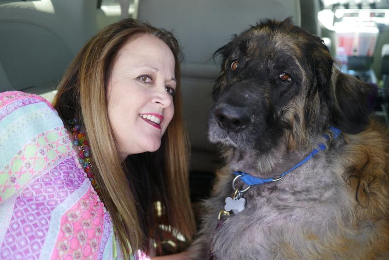 Marian Harris of Aledo poses with her 5-year-old dog, Sid. The Leonberger was supposed to have been euthanized but was apparently kept alive by her vet for blood transfusions.