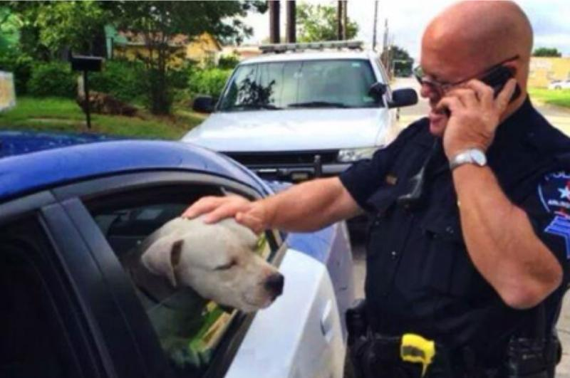 Arlington police Sgt. Gary Carter with Jeffrey, a pit bull he's saved twice this summer.